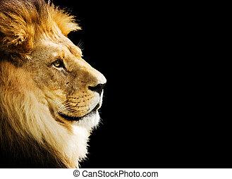 portrait, lion