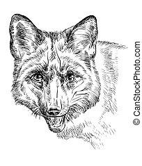 portrait, renard, vecteur