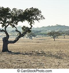portugal., arbres, bouchon