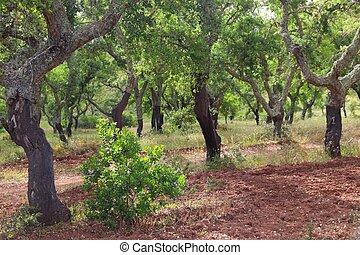 portugal, arbres, bouchon