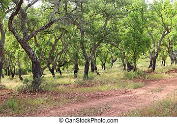 portugal, bouchon, plantation
