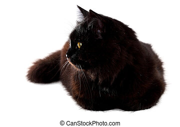 pose, chat, bas, arrière-plan noir, blanc