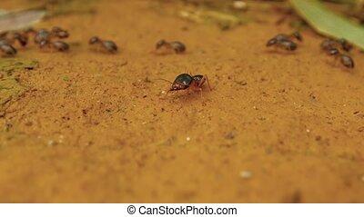 poste, termite, -, sien, soldat