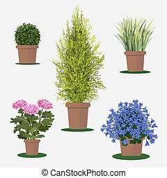 pot., fleurs, illustration