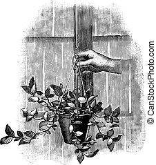 pot, gravure, dessin ligne, main, pendre, art, tenue, illustration antique, ou, fleur, vendange, plante