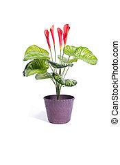 pot, isolé, fond, fleurs blanches, rouges
