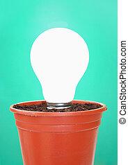 pot usine, ampoule, lumière