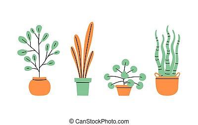 pots fleurs, maison, vases., fleurs, usines, collection.