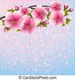 pourpre, cerise, -, japonaise, arbre, fleur, sakura, fond