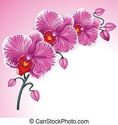 pourpre, orchidée