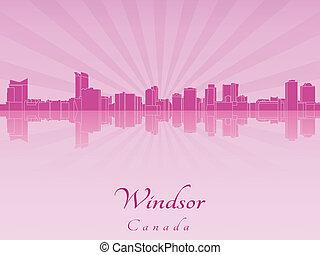 pourpre, radiant, orchidée, horizon, windsor