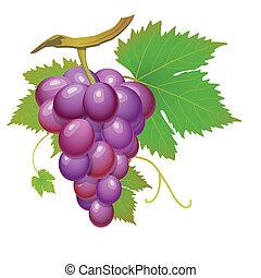 pourpre, raisin