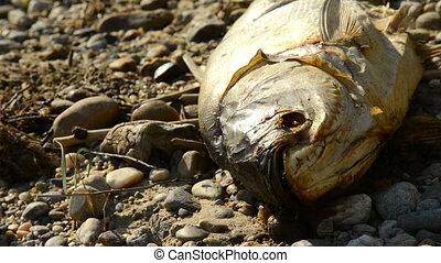 pourrir, fish, mouches, mort