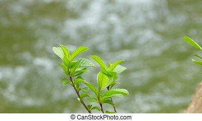 pousse, arbre, frais