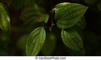 pousse feuilles