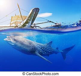 pousse, sous-marin, requin, baleine