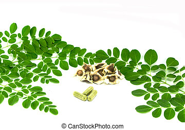 pr, (moringa, feuilles, cucumber-chinese, lam.), amer, oleifera