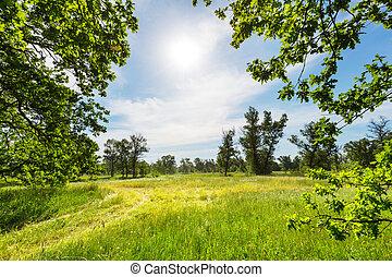prairie, été
