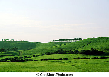 prairie, vert