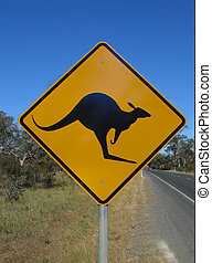 prendre garde, kangourous
