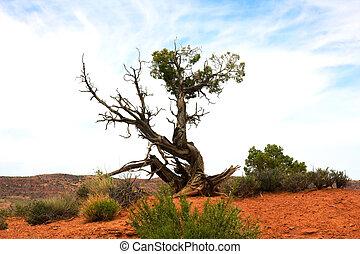 presque, arbre, désert, mort, rouges