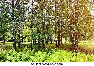 printemps, été, beau, blanc, ciel bleu, clouds., parc vert, vue, ou