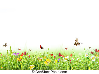 printemps, blanc, pré, fond