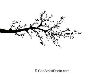 printemps, branche arbre