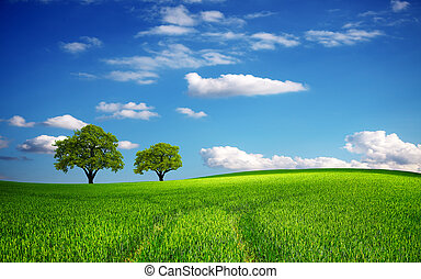 printemps, champ vert