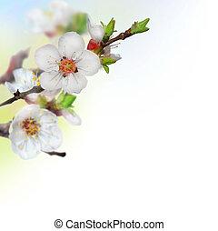 printemps, fleurs, cerise