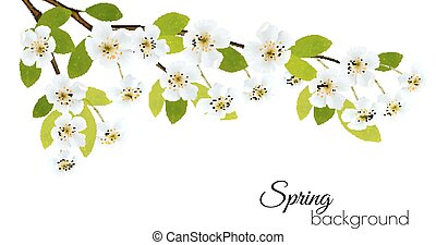 printemps, flowers., fond blanc, vector.
