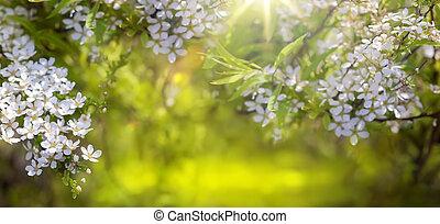 printemps, fond, fleur, frontière
