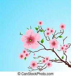 printemps, fond, floral