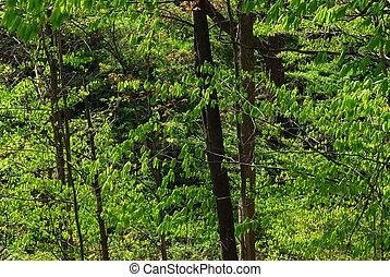 printemps, forêt verte