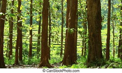 printemps, forêt