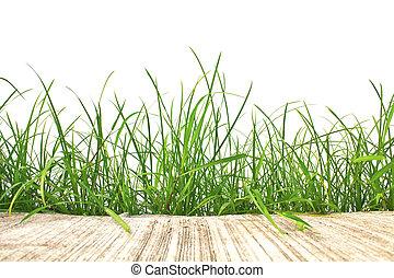 printemps, isolé, ciment, arrière-plan., vert, frais, blanc, herbe, route