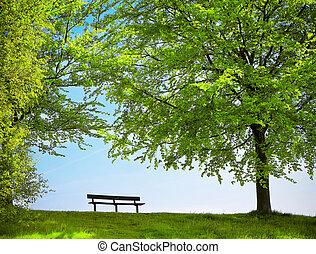 printemps, parc, vert