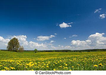 printemps, paysage.