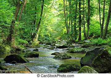 printemps, rivière, forêt, tchèque