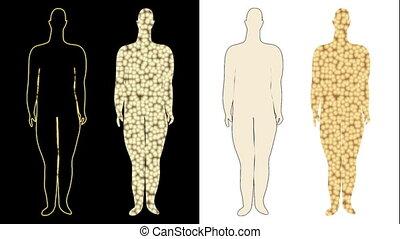 processus, cells), amaigrissement, graisse, (shown
