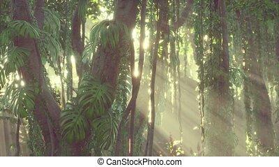 profond, brouillard, exotique, rainforest, jungle