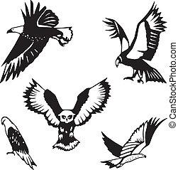 proie, cinq, stylisé, oiseaux