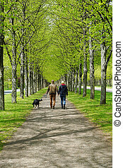 promenade, chien