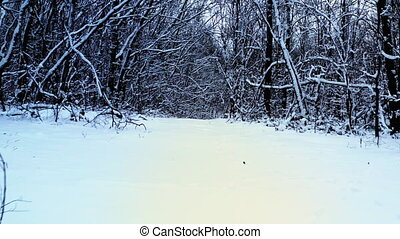 promenade, nu, long, sentier, neige-couvert, arbres, neigeux, forêt, dense
