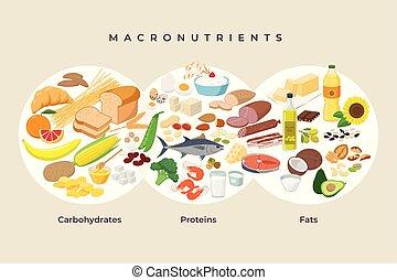 protéines, être régime, -, elements., macro, macronutrients., illustration, concept., vecteur, plat, nourritures, manger, conception, sain, comparaison, icônes, nourriture, hydrates carbone, isolated., graisses, principal, infographic, groupes