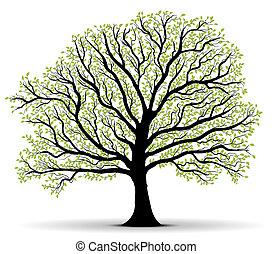 protection environnement, arbre vert