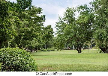 public, arbre, frais, herbe, parc, perspective, champ vert, beau, plante