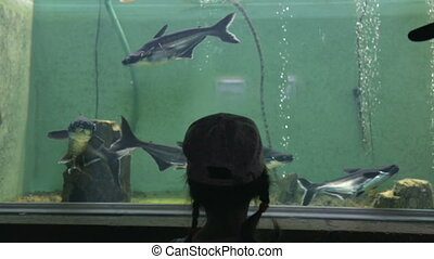 public, girl, peu, aquarium