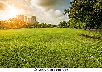public, matin, herbe, parc, feu vert, environnement, champ, toile de fond, usage, fond, beau