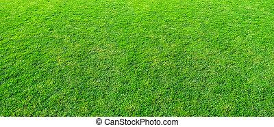 public, usage, ou, field., herbe, toile fond., parc, paysage, naturel, champ, fond, texture, vert